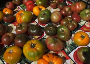 Heirloom tomatoes at the Napa farmer's market.